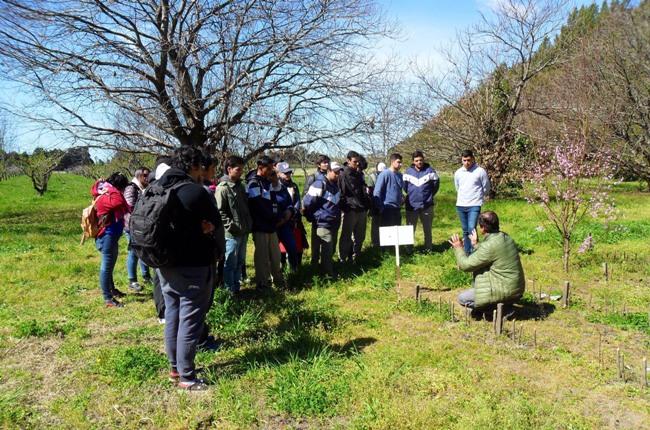 Llevamos adelante una capacitación sobre poda de frutales destinada a alumnos de la Escuela de Educación Agropecuaria