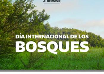 La Restauración Forestal: un camino a la recuperación y el bienestar.