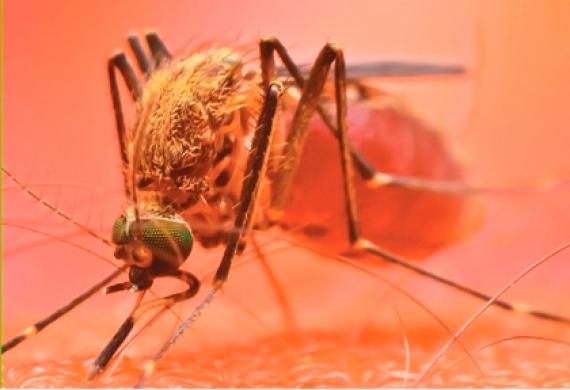 Capacitación sobre dengue y control de vectores con impacto en la salud